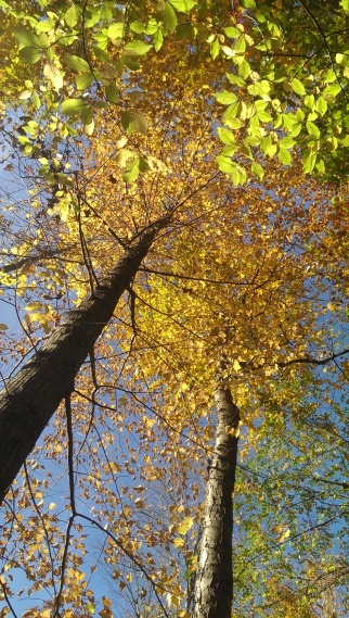 Vertical photograph. Fall foliage, orange, yellow leaves, tree canopy, Cleveland Metroparks. 2014.