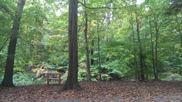 Horizontal photo. Serene forst scene with dramatic tall trees and small bench. Cleveland Metropark.