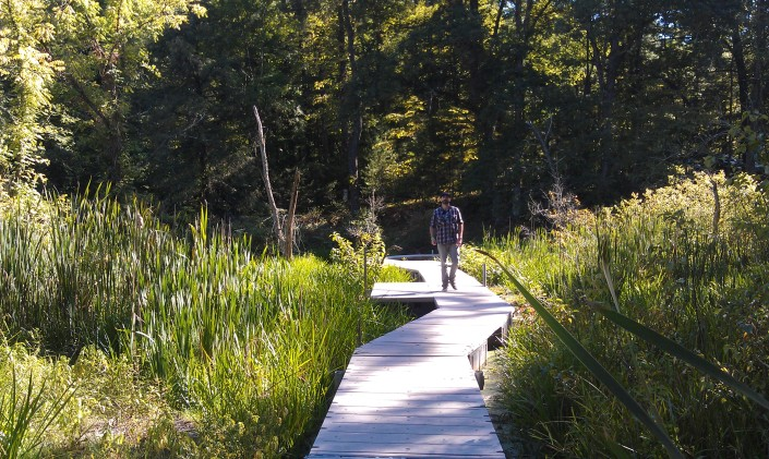 Horizontal photo. Bog and forest vegetation surrounds wooden boardwalk with a person in the distance walking on the path. Late afternoon sun creates deep shadows.