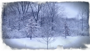 Horizontal photo. Exterior edges appear torn or roughed up. Intensity of color amplified through filter. Winter snow leading into forest scene. Intense blue, black and blue-gray snow.