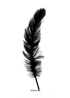 Cut-out of a feather (c) Joy Yarbrough.