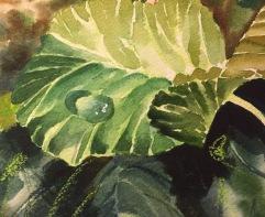 demo dew drop on leaf 2- sm-JMMason