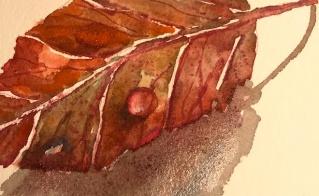 fall leaf w dew drop_JMMason_sm