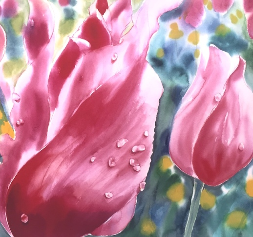 Close-up of pink tulips with droplets of water on them. There is a blurry background behind them.