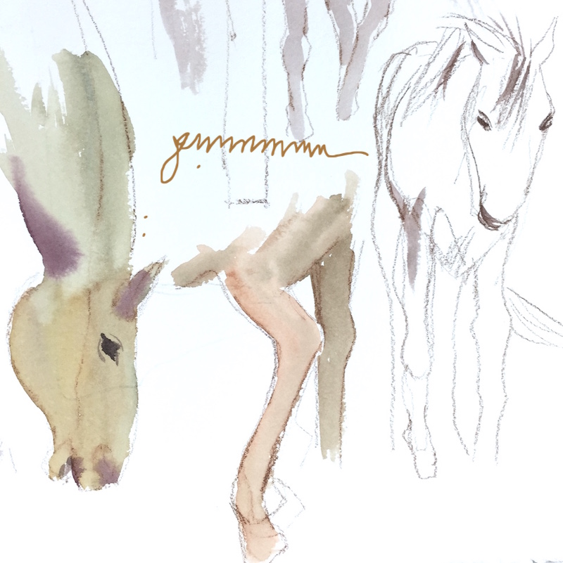 sketches in watercolor of elements of horses. Head, legs, colt.
