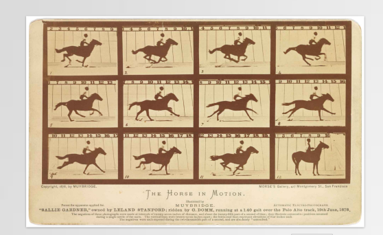 series of single photo frames of a horse running. Sequential frames show various leg configurations